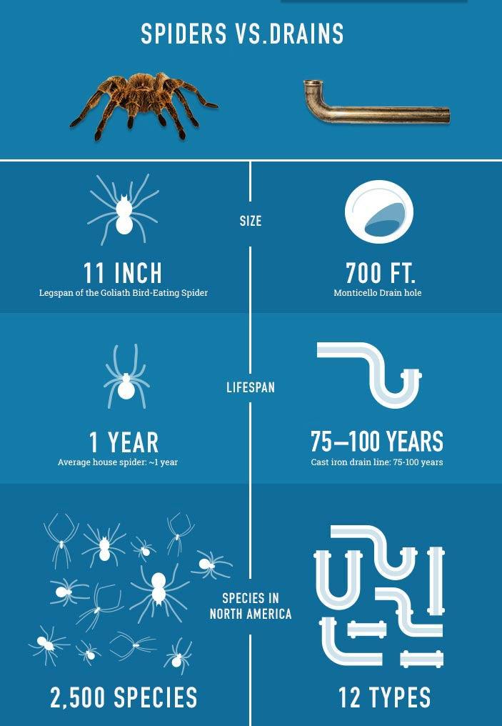 spider-myth-infographic.jpg